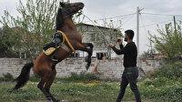 Kocagür köylülerinin geçim kaynağı rahvan atlar: Fiyatları 500 bini buluyor