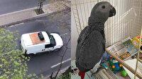 Kayıp papağanını 'anons yaparak' sokak sokak arıyor: Bulana 3 bin lira ödül