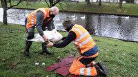 Danimarka'da bir çiftlikte kuş gribi tespit edildi: 19 bin kaz ve ördek itlaf ediliyor