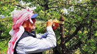 Kuşlar aç kalmasın diye dağ tepe dolaşıp ağaçları aşılıyor
