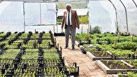 500 aileye 40 bin ata tohumu fidesi dağıtılacak: Salatalık biber domates ve patlıcan ekecekler