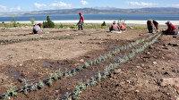 Kuruyan Burdur Gölü'nü susuz tarım kurtaracak: 16 yılda 30 milyon su tasarruf edildi