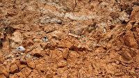 Bir milyar yıllık mikro fosil keşfedildi: Kayıtlara geçmiş en eski çok hücreli canlı olabilir