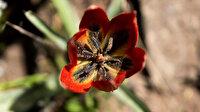 Bu çiçeği koparan yandı: Cezası 80 bin 460 lira