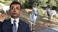 İBB'de 'kayıp at' krizi: Veteriner Hizmetleri Şube Müdürü görevden alındı