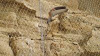 Silivri'de kuşları öldüren 'çelik ağ': İBB kuşlara hapishane yaptı