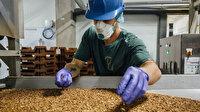 AB ilk kez bir böceği gıda olarak onayladı: 'Sarı un kurdu' yiyecek yapımında kullanılabilecek