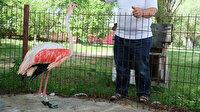 Manisa'da hayvanseverler ayağı yanan flamingoya protez bacak yaptı