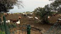 Adalar'da ürküten iddia: Sağlıklı atları ruam hastası atlarla aynı yere kapattılar