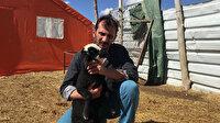 Kurtların 18 koyununu parçaladığı besiciye 15 koyun hediye edildi