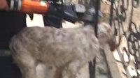 Muğla'da demir korkuluklara sıkışan köpeği itfaiye kurtardı