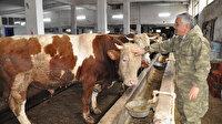 Ordu'daki inek oteli büyük ilgi görüyor: Hayvan sahiplerine büyük kolaylık sağlıyor