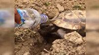 Manisalı işçi bitkin haldeki kaplumbağaya kendi suyundan içirdi
