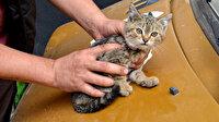 Duyarlı vatandaştan otomobilin sürücüsüne not: Kaputta kedi var