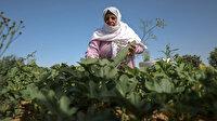 Filistinli kadınlar topraklarını İsrail'e bırakmamak için ön saflarda mücadele ediyor