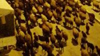 Iğdır'da vatandaşlar sahura koyun sesleriyle uyandı