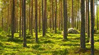 Dünya genelinde Fransa büyüklüğünde ormanlık alan yeniden yeşerdi