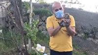 Sulama havuzunda mahsur kalan yavru tilkiler kurtarıldı