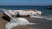 Mersin'de karaya vuran dev balinanın ölüm nedeni belli oldu