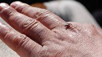 Uzmanlardan korkutan kene uyarısı: 900'e yakın hastalığı nakledebilir