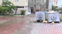 Maltepe'de çöp konteyneri kâbusu: Korkuyoruz mecburen arkamıza bakıyoruz