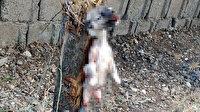 Kahramanmaraş'ta vahşet: Yavru köpeğin ayaklarını kesip, ağaca astılar