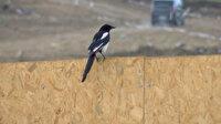 İstanbul'da kuşlarda Batı Nil Virüsü saptandı: Uzmanlar uyardı