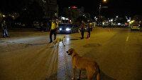 Sokak köpeklerinden polislere destek: Araçları tek tek durdurdular
