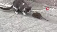 Fareden korkan kedinin görüntüsü kameraya yansıdı