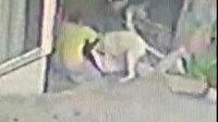 Başakşehir'de pitbull dehşeti: 16 yaşındaki Mine'ye 2 pitbull saldırdı