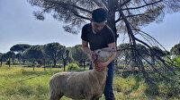 Hayallerini devlet desteğiyle gerçekleştirdi: Hibeyi alan mühendis çiftliğini kurdu
