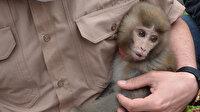 Mahallede bulunan evcil maymun ekiplere teslim edildi