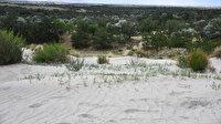 Dünyada ilk örnek: Yeşeren çöl Karapınar