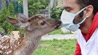 Bitkin halde bulunan geyik yavrusu tedavi edilip biberonla beslendi