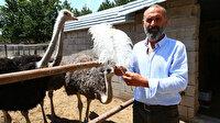 Patates üretimini bırakıp devekuşu çiftliği kurdu: Yıllık 300 bin lira ciro elde ediyor