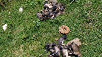 Çuvala koyup dereye attıkları 20 köpek yavrusu telef oldu