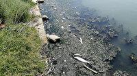 Rengi değişen Büyükçekmece Gölü'nde ölen balıklar kıyıya vurdu