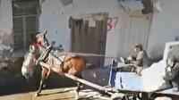 Adana'da başıboş gezen pitbull saldırdığı atı yaraladı