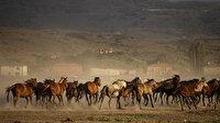 Yılkı atları fotoğrafçıların ilgi odağı