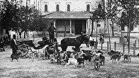 Osmanlı'daki 'hayvan hakları' tarihi belgelerde: Yük hayvanlarına haftada bir gün izin