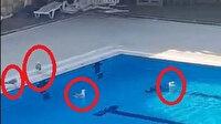 Mudanya'da olimpik yüzme havuzu martılara kaldı