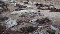 Afrin'de PKK vahşeti: 35 sivilin cansız bedeni toplu mezarda bulundu