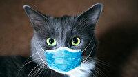İngiliz varyantı ile enfekte olan ilk kedi bilimsel araştırma konusu oldu