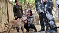 Şehit onbaşının gazi köpeği 'Atmaca' ailesine sahiplendirildi: Sanki yavrumdan bir parça geldi