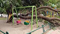 Faciadan dönüldü: 70 yıllık dut ağacı parktaki salıncakların üzerine devrildi