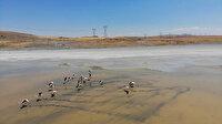 Kuraklığı yenik düşen Yalıntaş Göleti'nde flamingolar yaşam mücadelesi veriyor