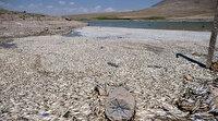 Konya'da korkutan görüntü: Binlerce balık kıyıya vurdu