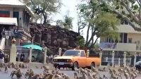Tayland'da maymunların çete savaşı
