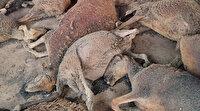 Manavgat'ta 100'e yakın küçükbaş hayvan telef oldu