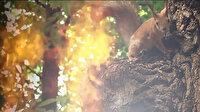 Orman Genel Müdürlüğü'nden farkındalık paylaşımı: Ormanda ateş yakma, çöp ve izmarit atma!